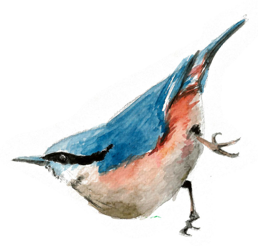 Aquarell Birds